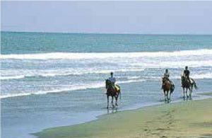 乗馬体験(砂浜)