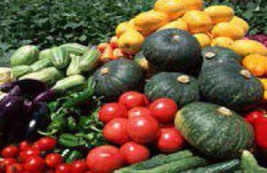 農家の指導付き・栽培委託OKの貸農園