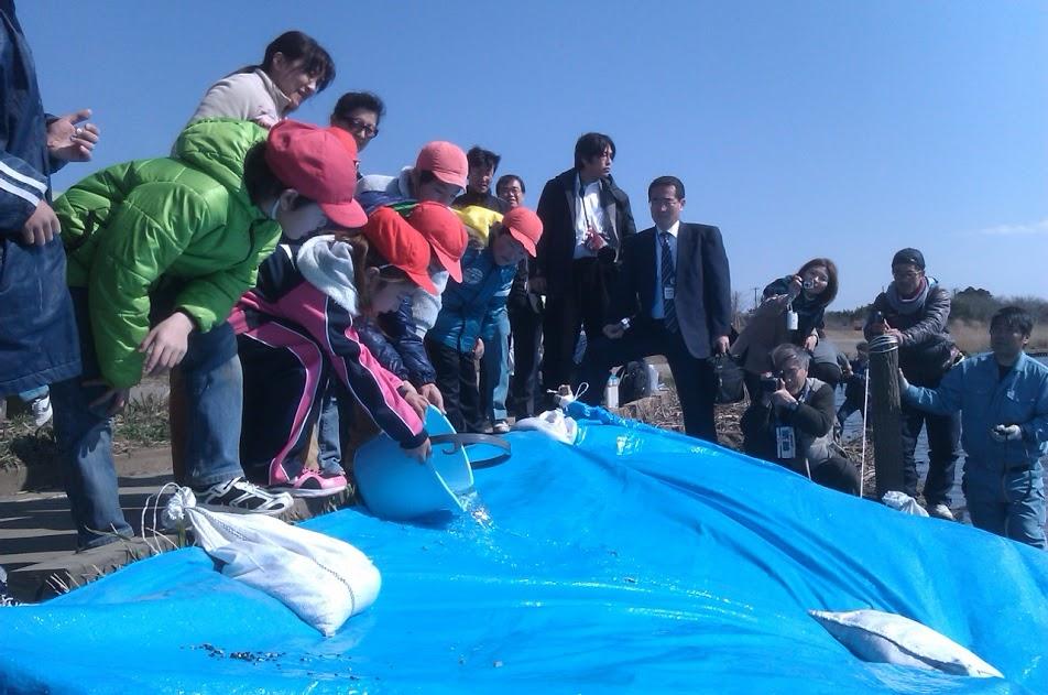 当館から徒歩3分の栗山川では、自然回帰した鮭の卵を各学校や家庭で孵化させ、放流しています。